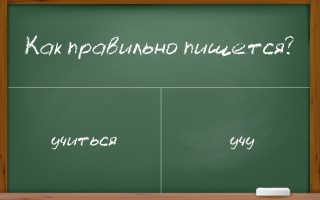 """Как написать правильно: """"учу"""" или """"учю"""", """"учиться"""" или """"учится"""""""